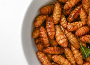 insects larvae protein