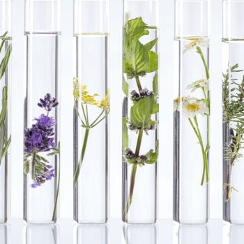 test tubes with water and plants