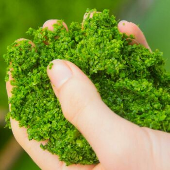 duckweed in hand plant protein