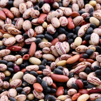 all kinds of pulses beans
